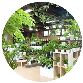 Centrami ogrodniczymi